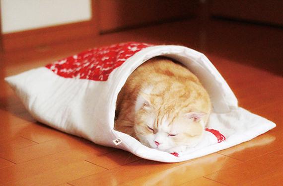 猫部布団モニター_570